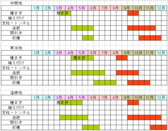カブの栽培カレンダー