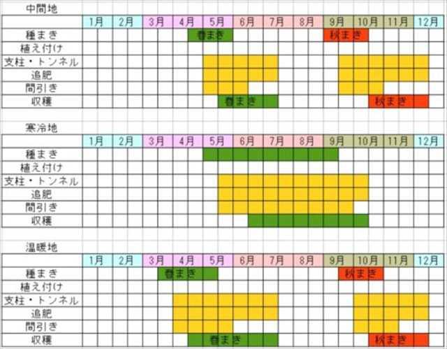 チンゲン菜栽培カレンダー