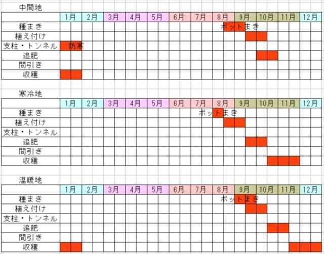 白菜の栽培カレンダー