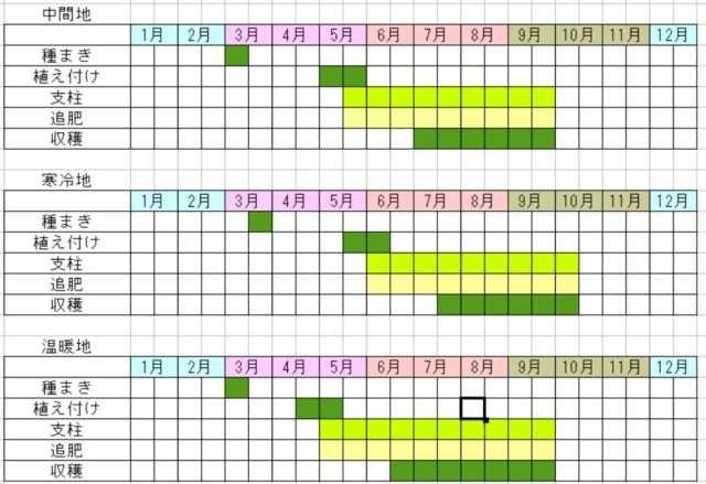 ピーマンの栽培カレンダー