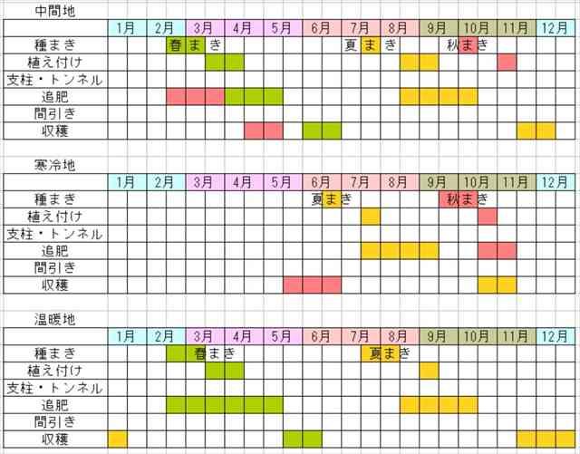 キャベツの栽培スケジュール