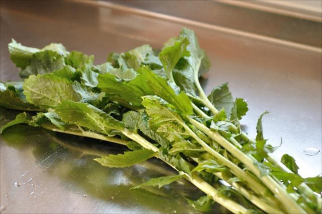 ノラボウ菜