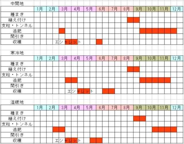 ラッキョウの栽培カレンダー