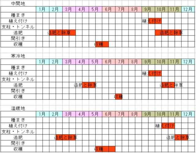 ニンニクの栽培カレンダー